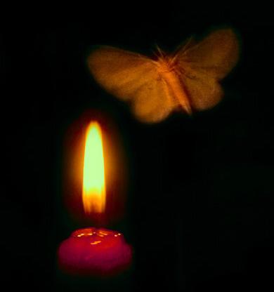 Լույսն այրեց նրա թևերը