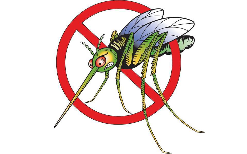 5 մահացու բույր մոծակների դեմ