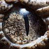 Կենդանիների աչքերը խոշոր պլանով (14 ֆոտո)