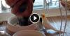 Թե ինչպես էր թութակը երգում շան համար (տեսանյութ)