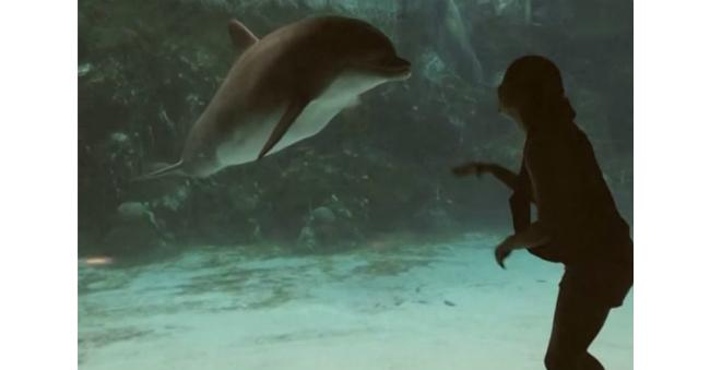 delfin-hohotunchik-devushka-sluchajno-rassmeshila-rybu_3e1b750a35f1d268ff7059d628dc9fba
