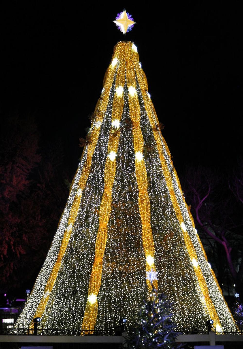 fir-tree-9