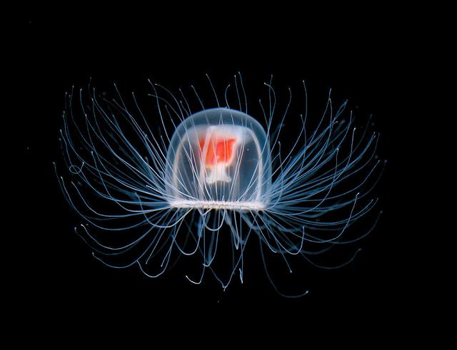 medusa-inmortal