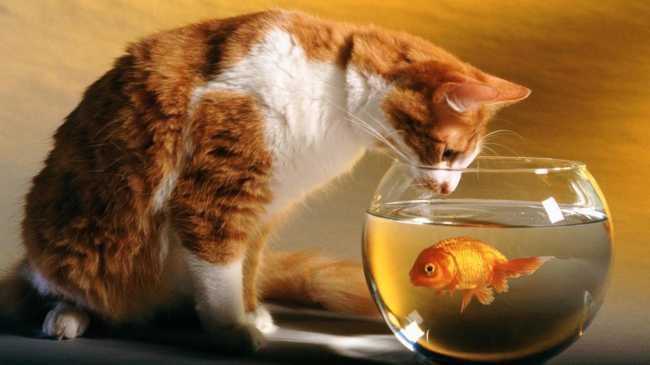 cat-and-fish-love-wallpaper