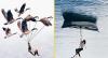Երևակայությունը ցնցող 20 լուսանկար, որոնք կստիպեն ձեզ սուզվել սյուրռեալիզմի աշխարհ