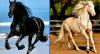 Ազատ և ազնվազարմ։ Ձիերի 10 ամենագեղեցիկ ցեղատեսակները