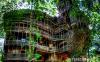 Հոգևորականը իր ձեռքով ծառի վրա պատրաստեց 10 հարկանի տուն: Այն հրաշալի տեսք ունի